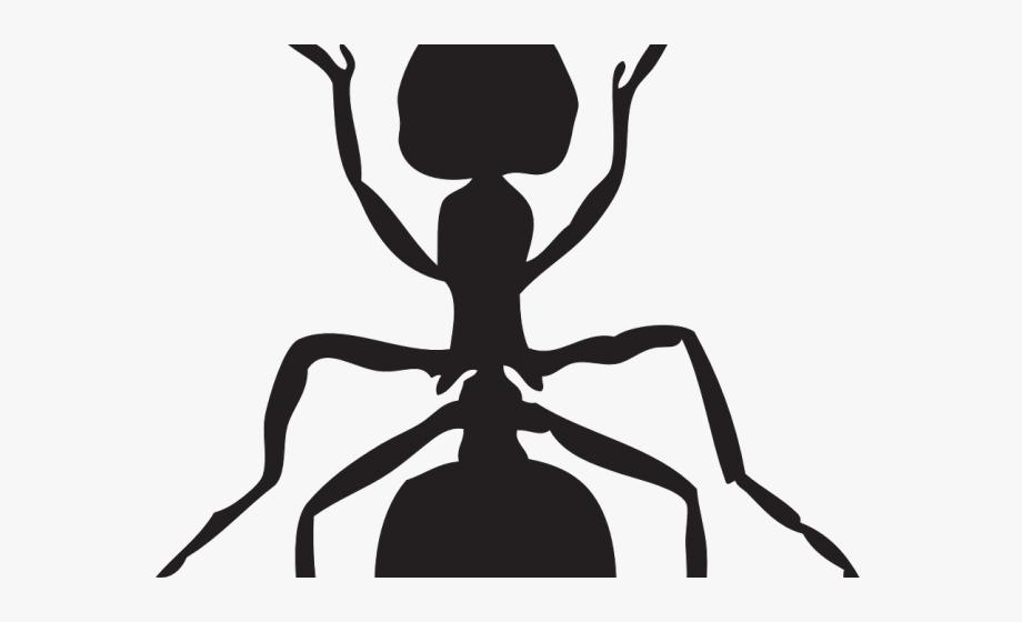 Black and white . Ant clipart underground