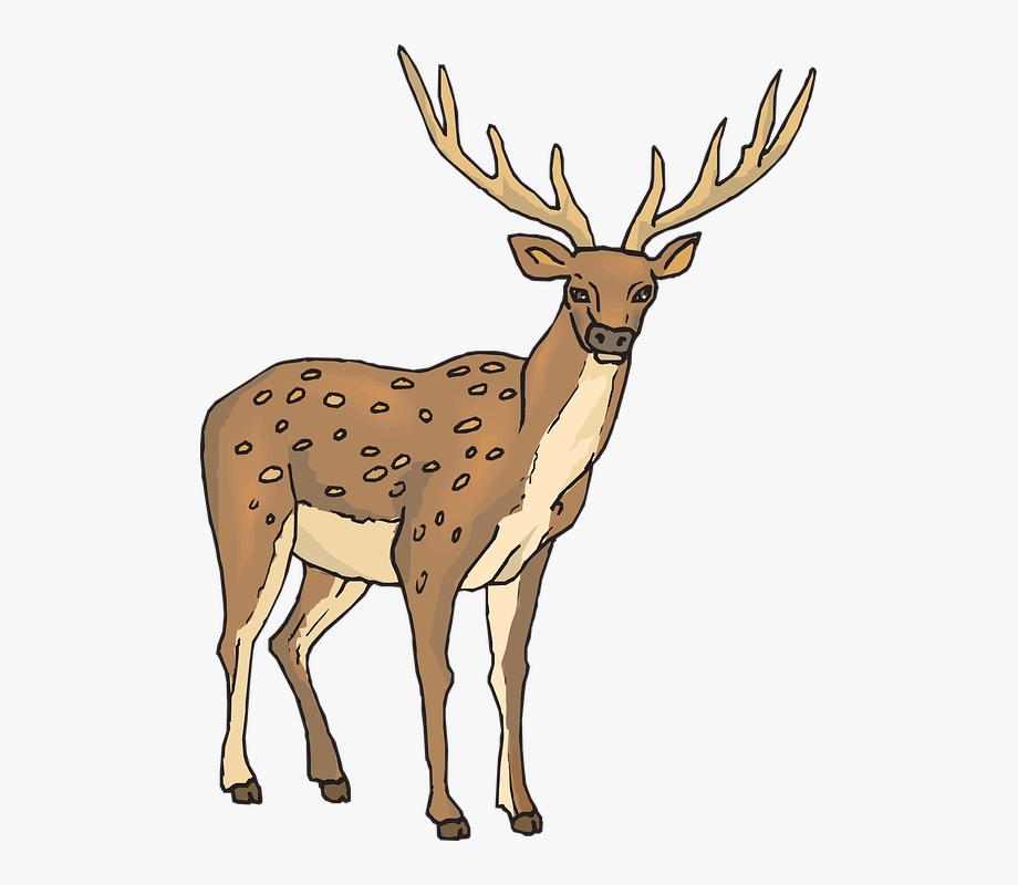 Antler clipart deer horn. Png free