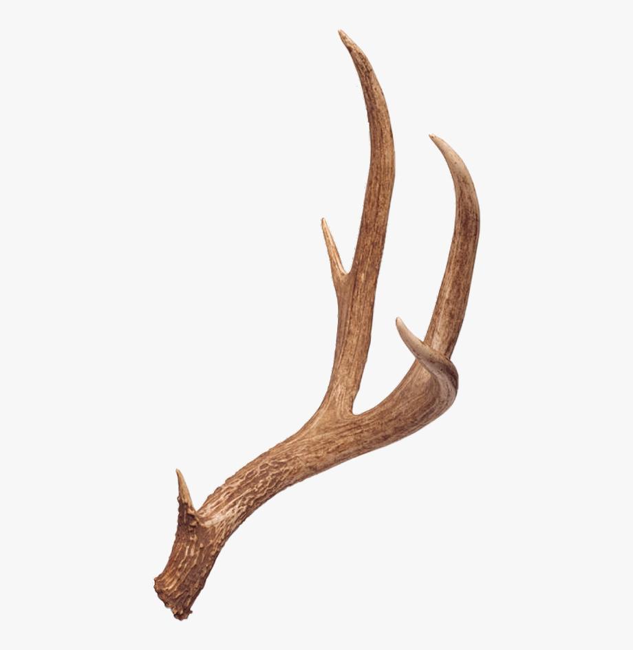 Antler clipart deer rack. Antlers free cliparts on