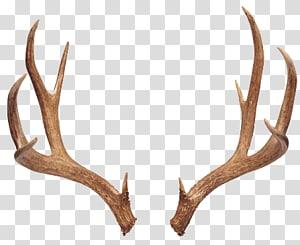 White tailed elk reindeer. Antler clipart deer rack