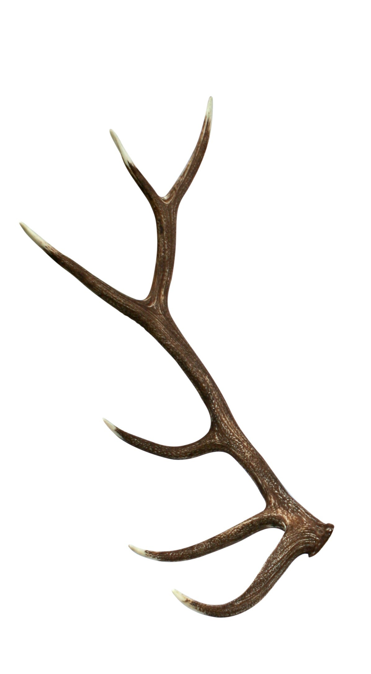 collection of antlers. Antler clipart elk