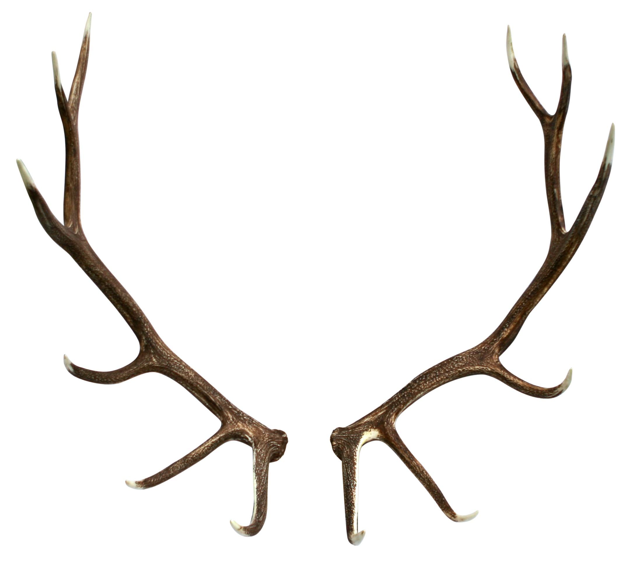 Antlers clip art library. Antler clipart elk