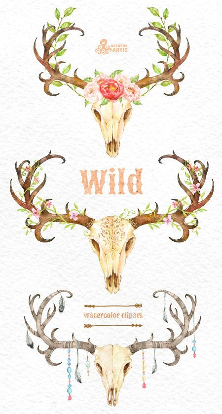 Antler clipart feather. Wild watercolor skulls with