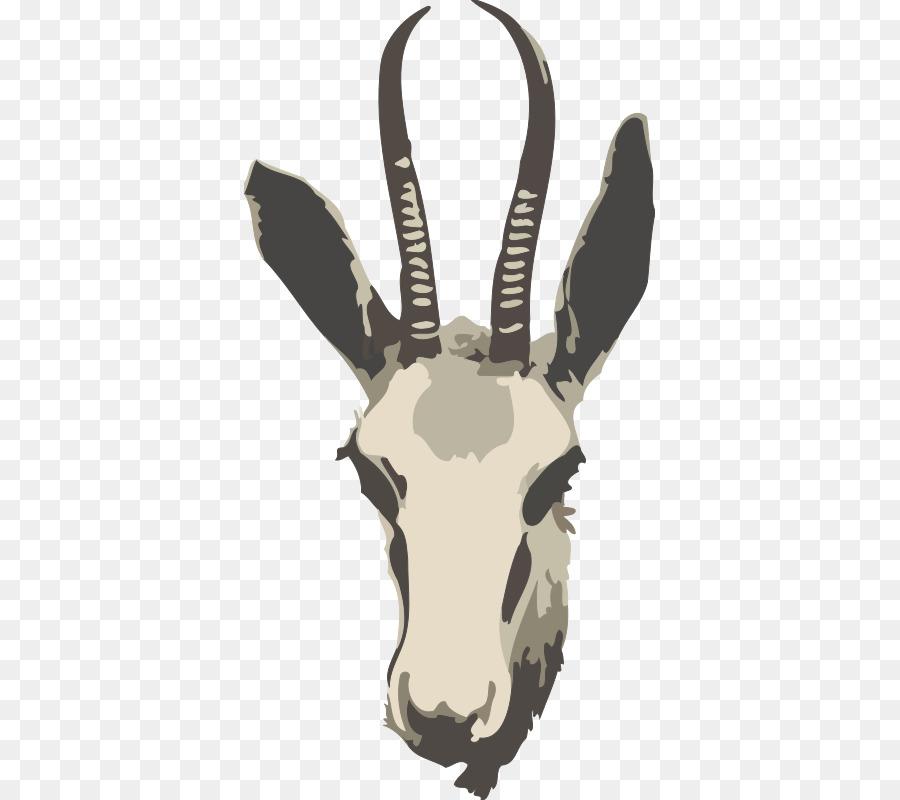 Antler clipart gazelle. Springbok impala antelope clip