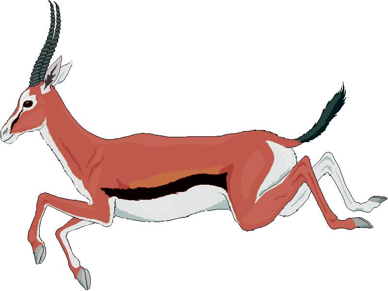 Antler clipart gazelle. Panda free images