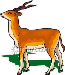 Antler clipart gazelle. With twisted horns royalty