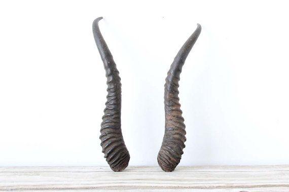 Pair of horns horn. Antler clipart gazelle