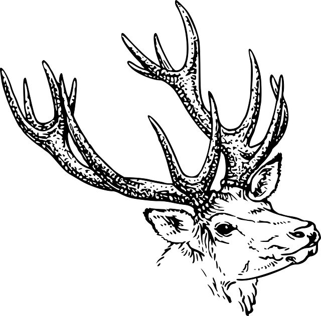 Antlers clipart outline. Deer horn drawing at
