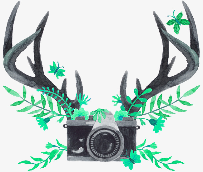 Green antlers camera decorative. Antler clipart simple