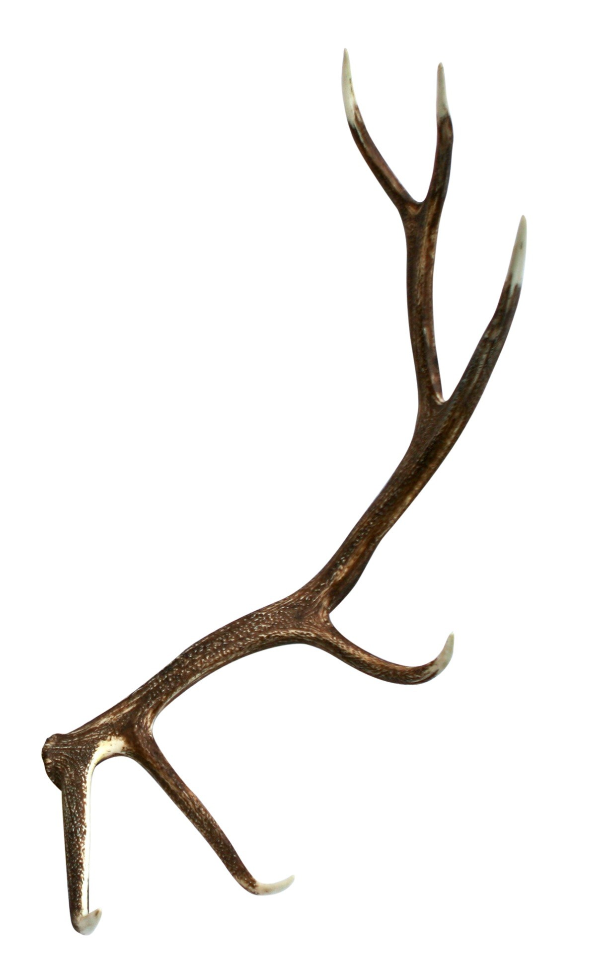 Elk faux antler cast. Antlers clipart single