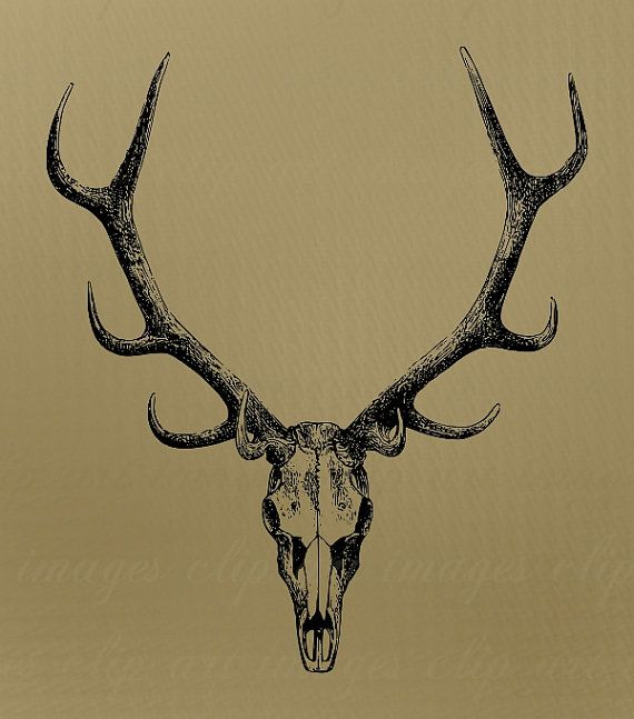 Skull clip art with. Antlers clipart sketch
