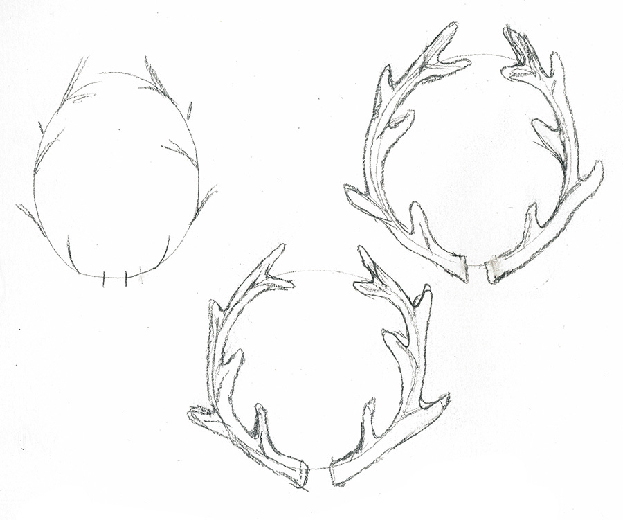 How to draw antler. Antlers clipart sketch