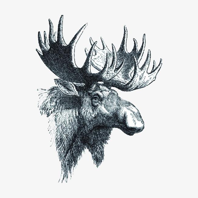 Antler clipart sketch. Deer big antlers of