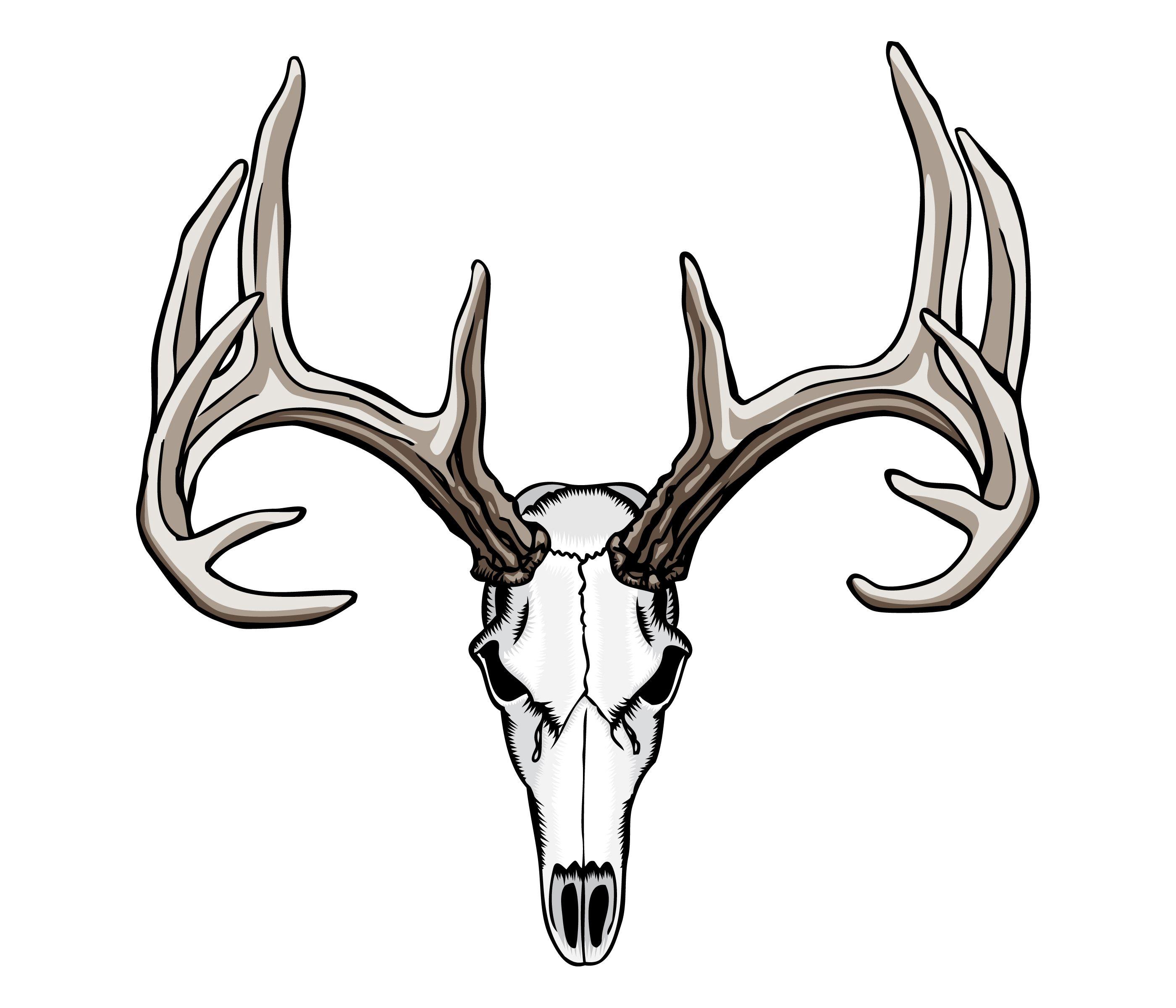 Antler clipart sketch. Whitetail deer skull tattoos