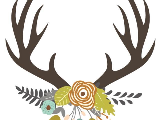 Antler clipart stag. Free deer skull download
