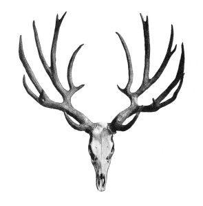 Antler clipart stag. Deer antlers panda free