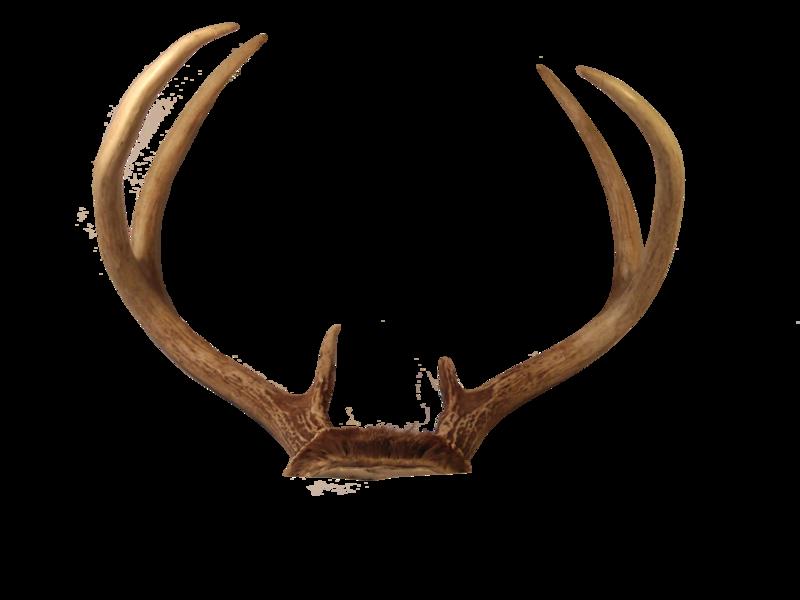 Deer png mart. Antlers clipart transparent background