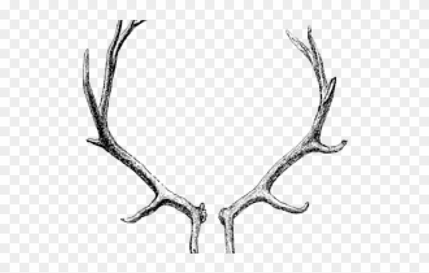 Antlers clipart transparent background. Antler png download