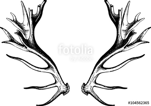 Drawing deer antlers stock. Antler clipart vintage