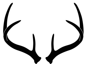 Antler clipart white tail. Antlerscore com whitetail antlers