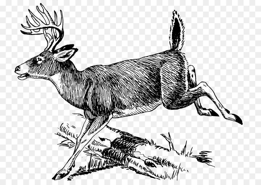 Tailed deer clip art. Antler clipart white tail