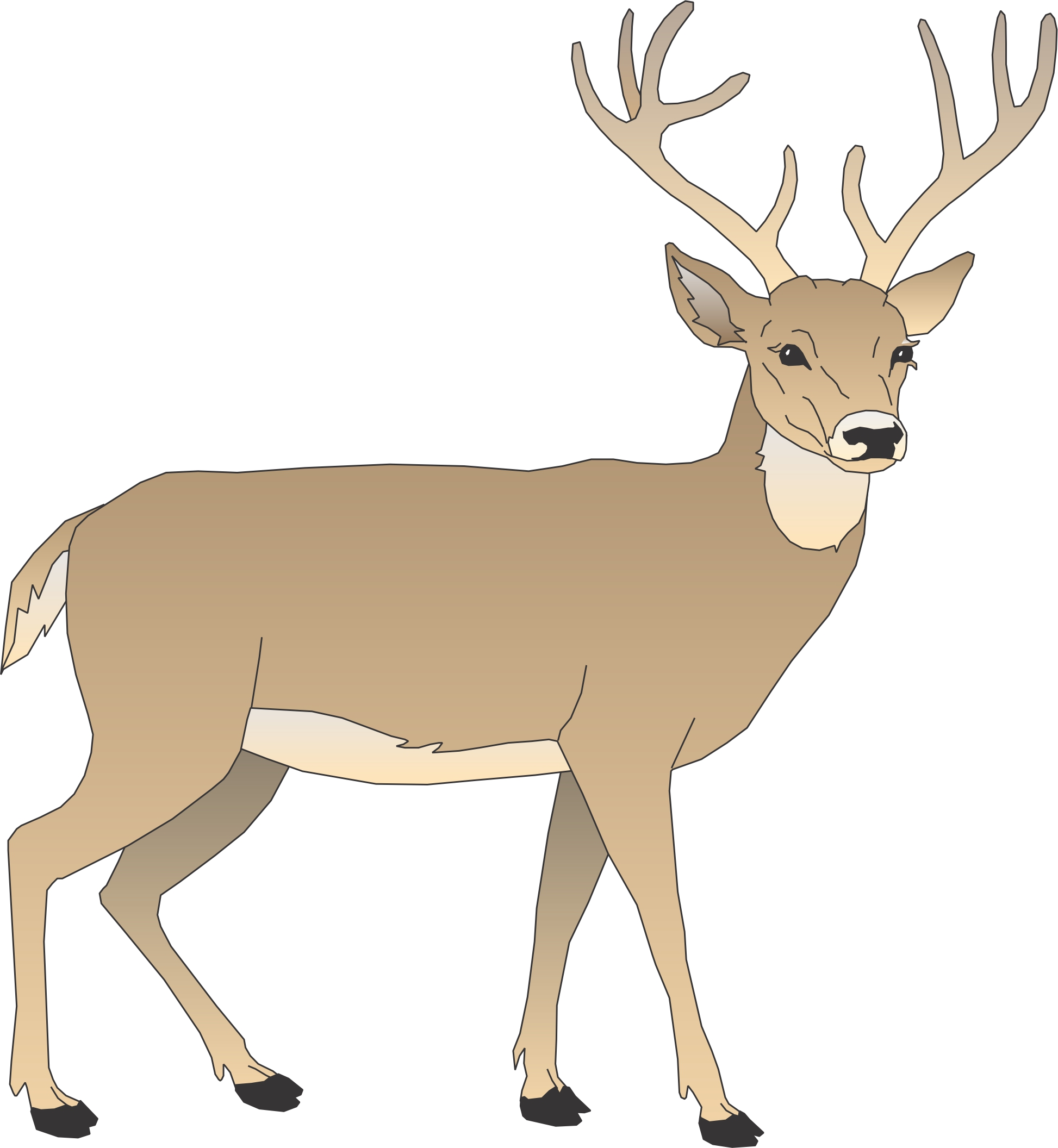Deer clipart small deer. Free cartoon pictures of