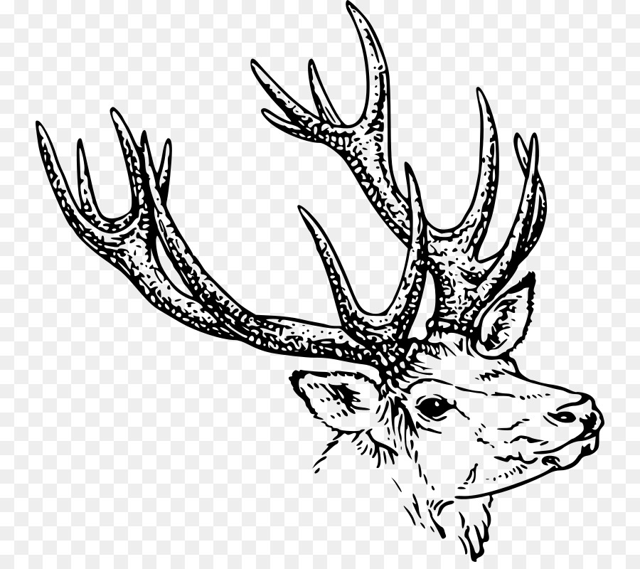 Deer cilpart extraordinary ideas. Antlers clipart black and white