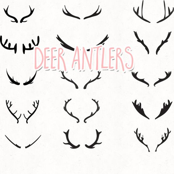 Horn pencil and in. Antlers clipart deer antler