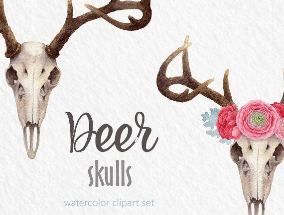 Antler skull . Antlers clipart deer rack