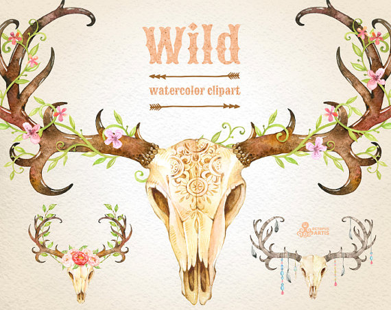 Antlers clipart feather. Wild watercolor skulls with