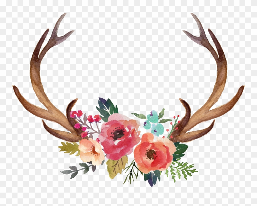 Antler moose clip art. Antlers clipart flower