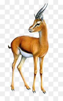 Antlers clipart gazelle. Pronghorn png and psd