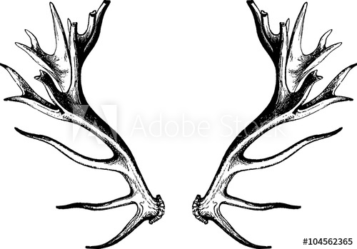 Drawing deer buy this. Antlers clipart vintage