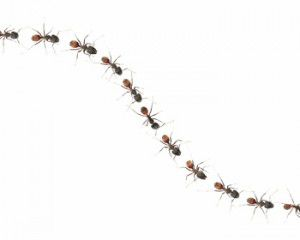 Ants clipart ants marching. The go six by