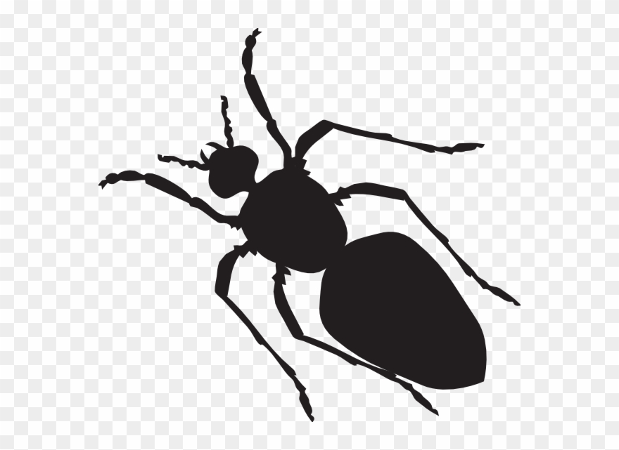 Black ant silhouette clip. Ants clipart body