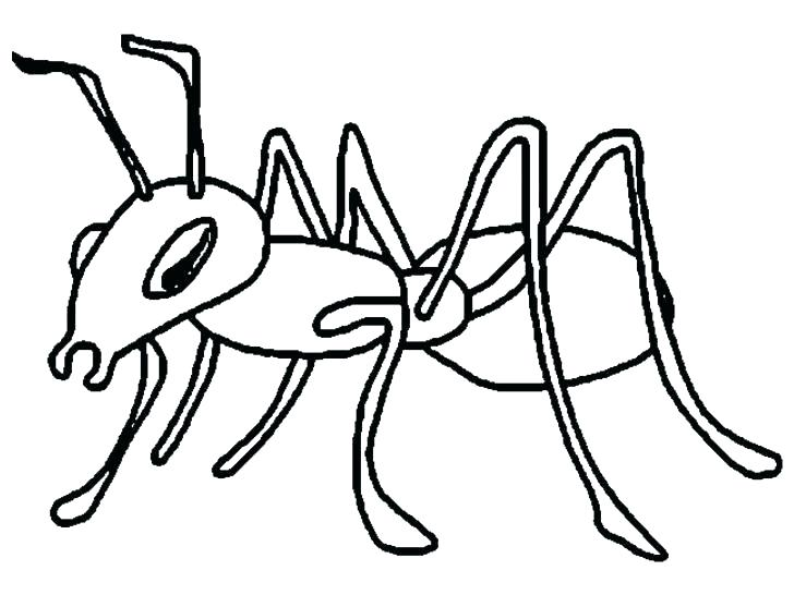 Ants clipart colour. Ant pictures to color
