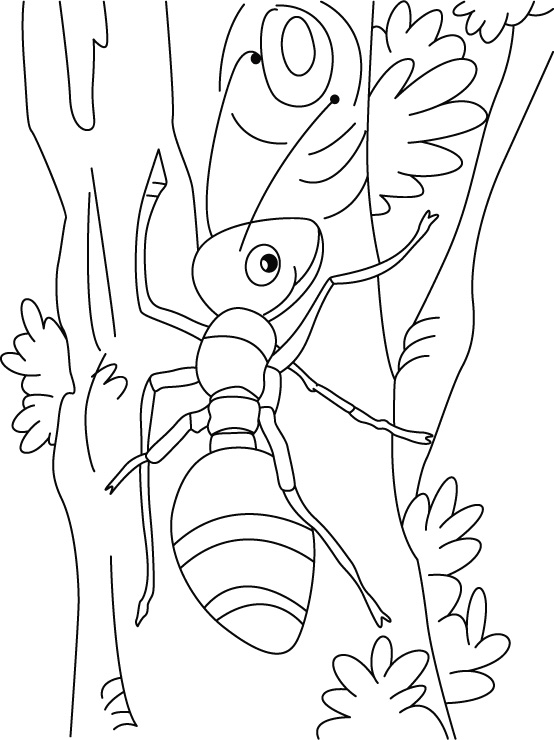 Coloring pages ant page. Ants clipart colour