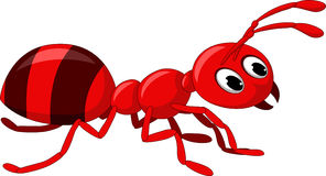 collection of red. Ants clipart fire ant