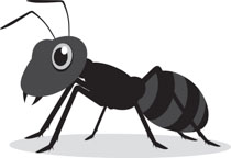 Search results for clip. Ants clipart gray