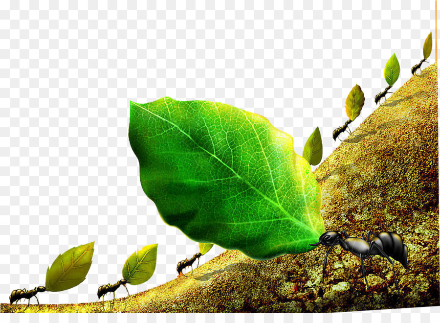 Colony bee leafcutter cooperation. Ants clipart leaf cutter ant
