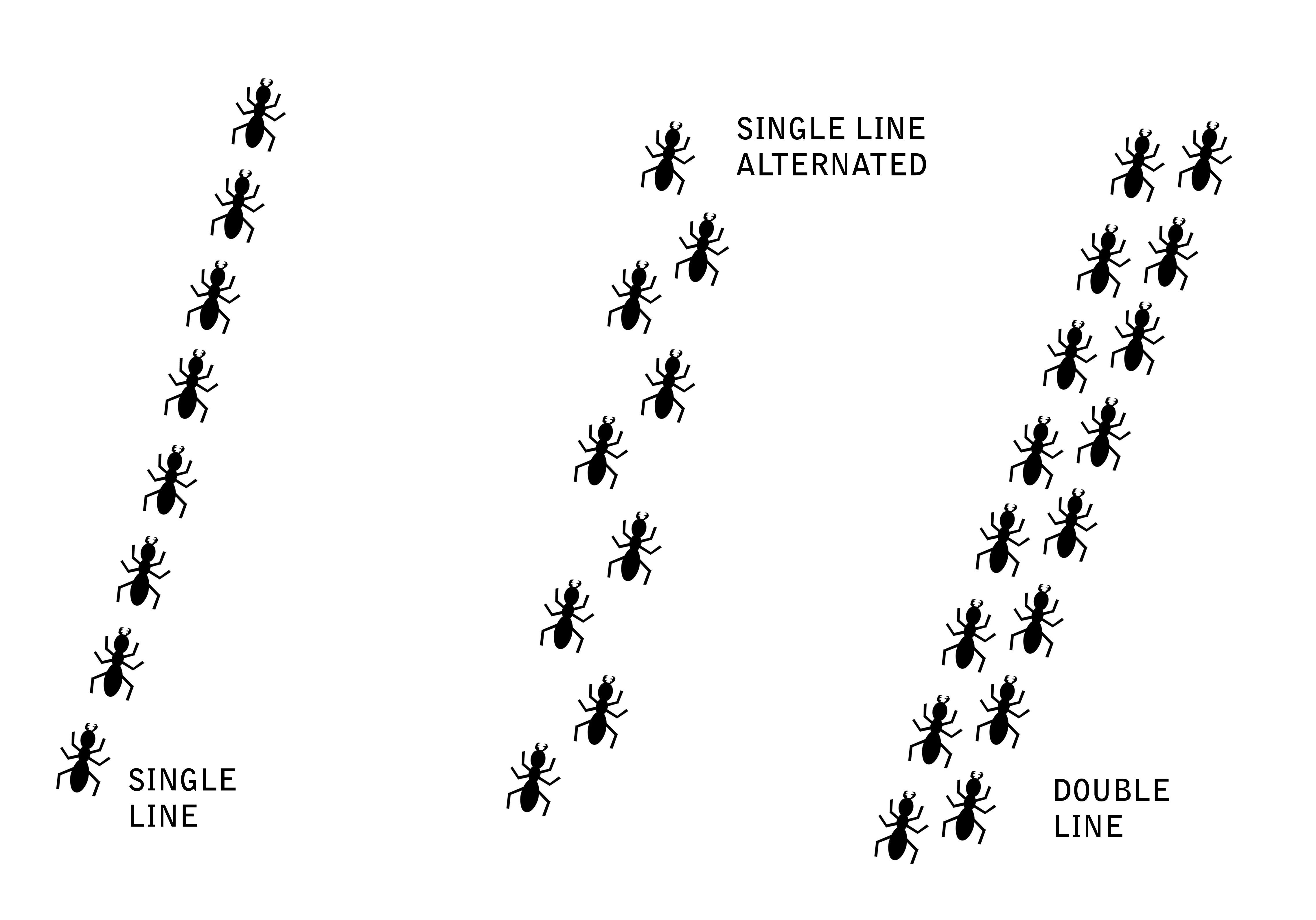 collection of high. Ants clipart line