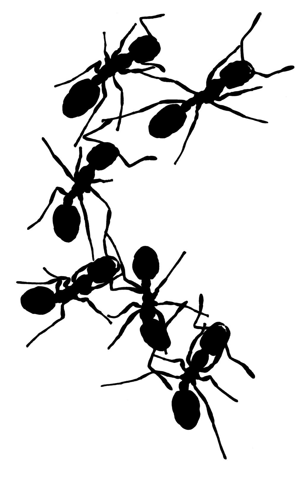 Ant black and white. Ants clipart line