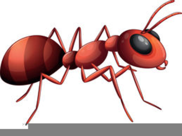 Ants clipart name. Free animated images at