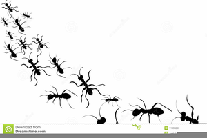 Ant black and white. Ants clipart outline