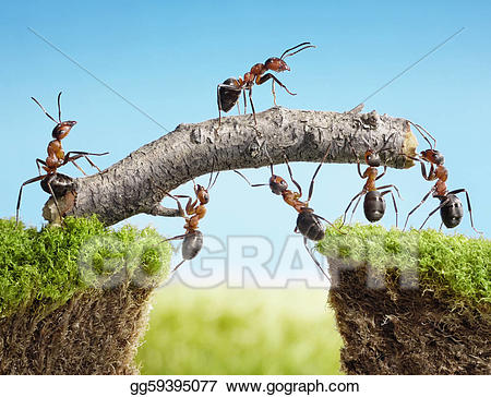 Drawing team of constructing. Ants clipart teamwork