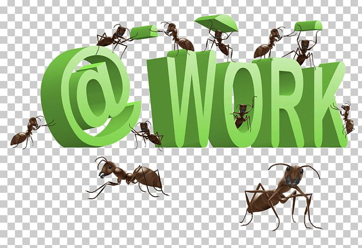 At png ant nest. Ants clipart work