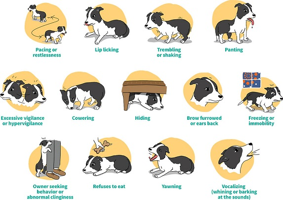 Blog post canine noise. Anxiety clipart restlessness