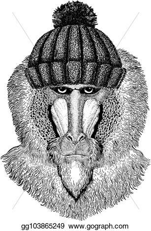 Ape clipart baboon. Vector art monkey dog