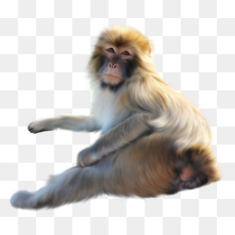 Baboons png images vectors. Ape clipart baboon