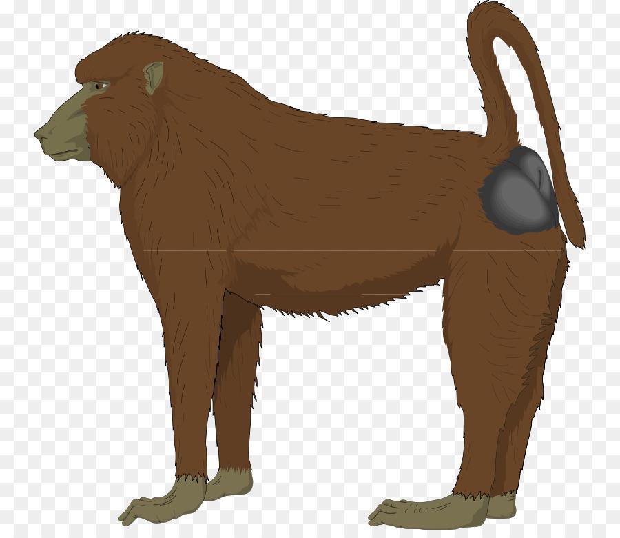 Mandrill hamadryas clip art. Ape clipart baboon